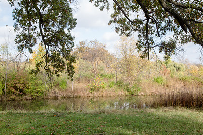 Forest Park 11 3 2016-4080