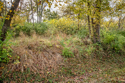 Forest Park 11 3 2016-4075