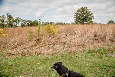Forest Park 11 3 2016-4051