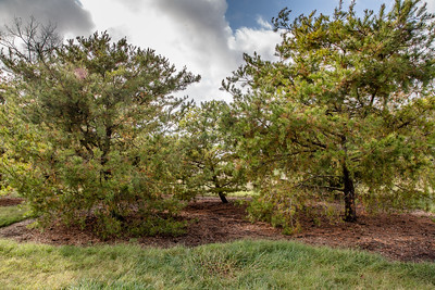 Forest Park 11 3 2016-4067