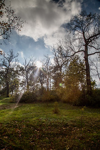 Forest Park 11 3 2016-4077