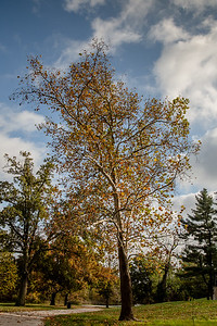 Forest Park 11 3 2016-4076