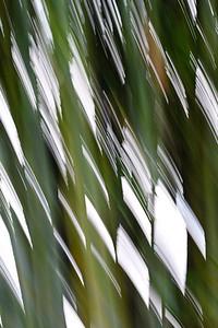Light Wind and Bamboo at Mercer Arboretum