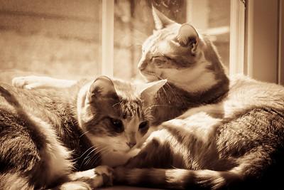 catsInWindow_20100725_0005-2