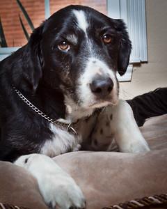 dogsLaborDay_20100904_0049