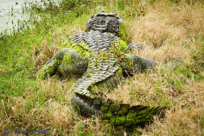Alligator at Brazos Bend Park, Texas