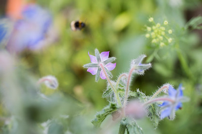 Dreamy Bumblebee
