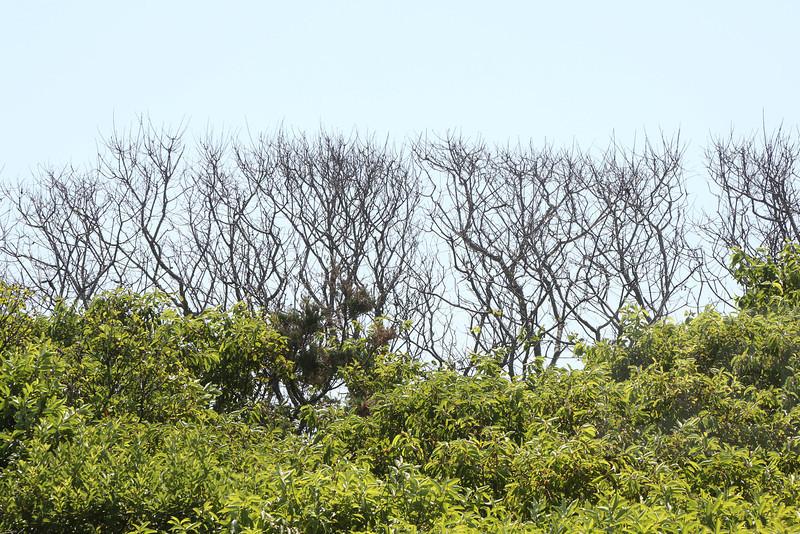 Cherry Grove - Fire Island<br /> <br /> 07.16.13<br /> <br /> Credit: Jonathan Grassi