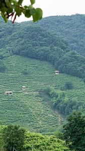 Prosecco Road