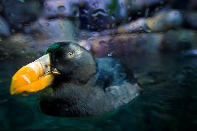07_12_28 d3 test aquarium 0490