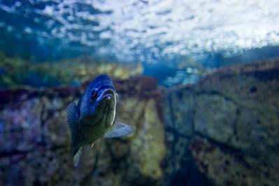 07_12_28 d3 test aquarium 0156