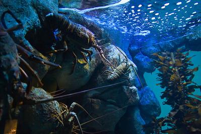 07_12_28 d3 test aquarium 0085