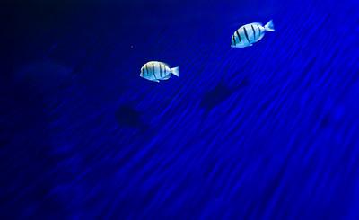07_12_28 d3 test aquarium 0194