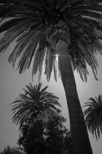08_10_12 palms 0099
