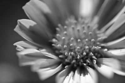 09_03_08 Anza Borrego Flowers 0422