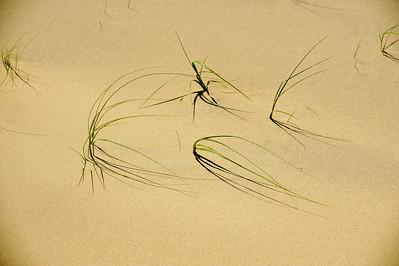 10_05_31 kelso dunes 0051
