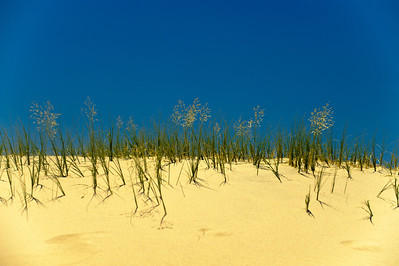 10_05_31 kelso dunes 0038
