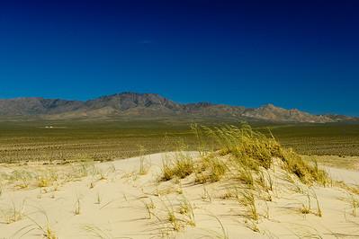 10_05_31 kelso dunes 0195