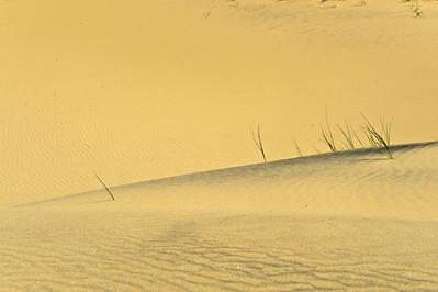 10_05_31 kelso dunes 0197