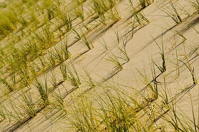 10_05_31 kelso dunes 0169
