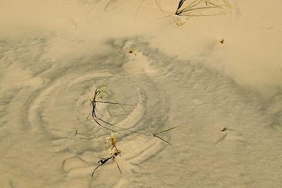 10_05_31 kelso dunes 0149