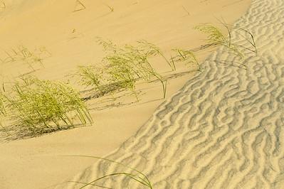 10_05_31 kelso dunes 0181