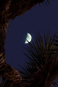 moon-jtreeComp