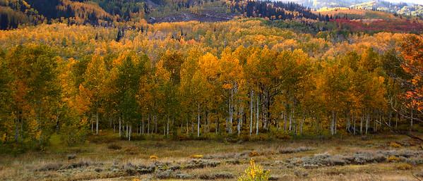 Late Fall, Wasatch Back, Guardsman Pass, Utah