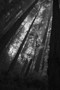 10_09_30redwoods national park0733