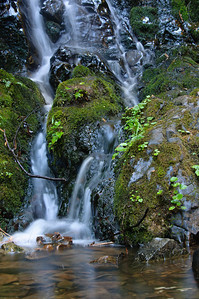 10_09_30redwoods national park0479