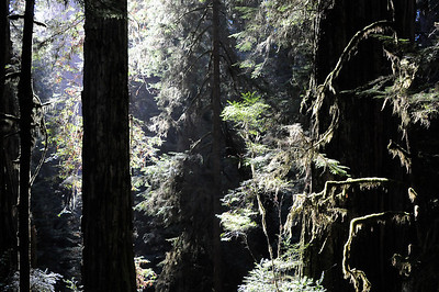 10_09_30redwoods national park0178