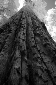 10_09_30redwoods national park0815