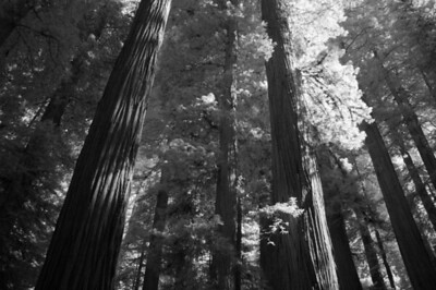 10_09_30redwoods national park0838