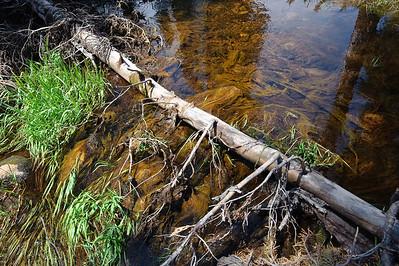 09_07_08 Twin Lakes Loop 0219