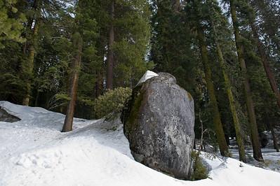08_03_08 sequoia and turlock 0069