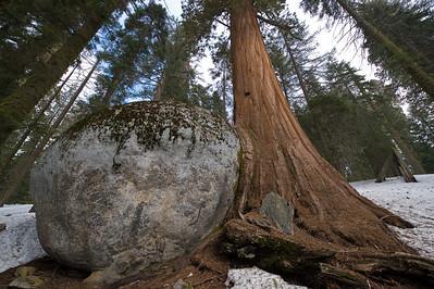 08_03_08 sequoia and turlock 0081