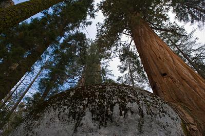 08_03_08 sequoia and turlock 0090