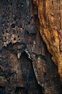 08_03_08 sequoia and turlock 0173