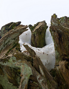 08_03_08 sequoia and turlock 0042
