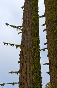 08_03_08 sequoia and turlock 0036