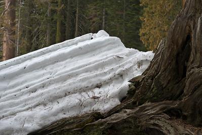 08_03_08 sequoia and turlock 0113