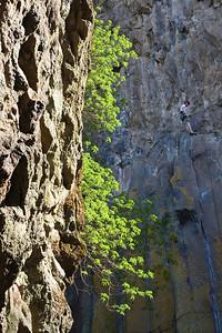08_03_09 sequoia and turlock 0277