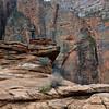 08_11_02 Zion Overlook Hike 0226