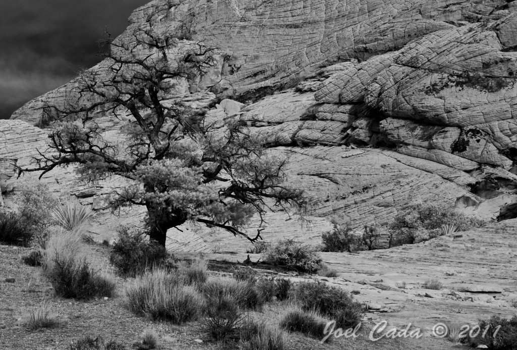 Red Rock Canyon (1/16/2011)