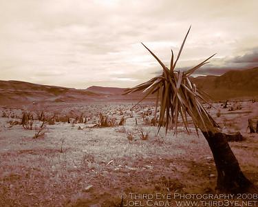 """""""Desolate"""""""