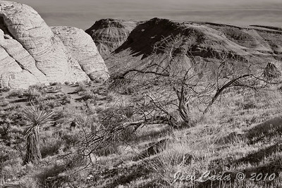 Red Rock Canyon (3/30/2010)