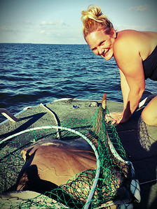 Sting Ray Aboard