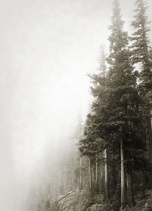 mountain_trees