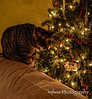 McClear Christmas 2012 (9 of 9)
