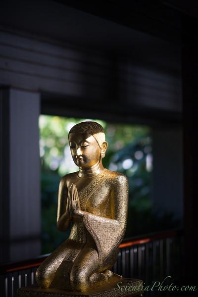 Buddhist Supplicant in Prayer